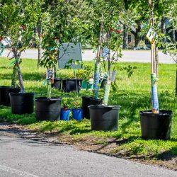 Manor Park Sustainability Series
